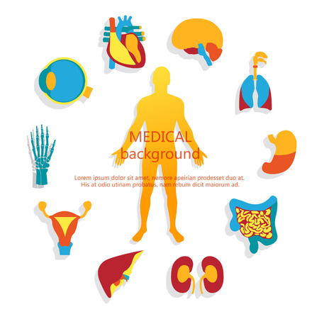 Medical background. Human anatomy. Vectores