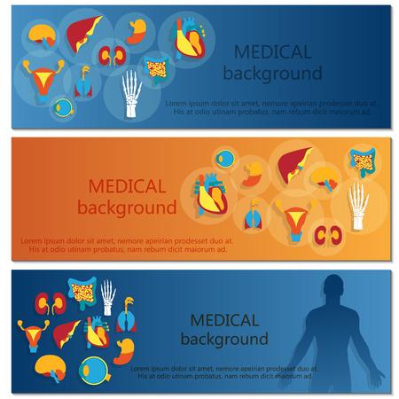 human anatomy organs: Concept of web banner. Medical background.Human anatomy.