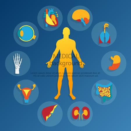 医療の背景。人間の解剖学.  イラスト・ベクター素材