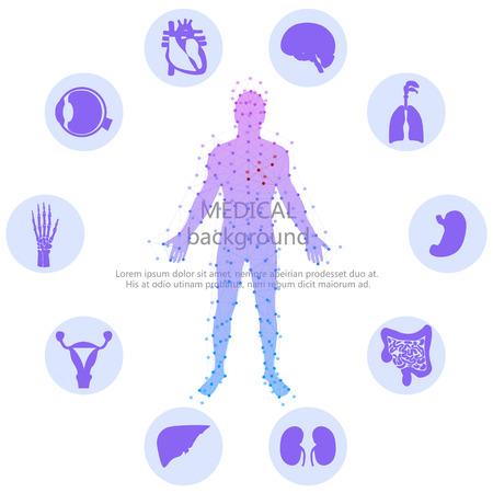 silueta humana: Antecedentes médicos. Anatomía humana. Vectores