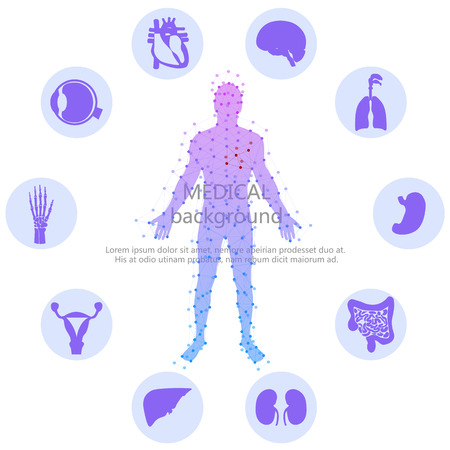 body line: Medical background. Human anatomy. Illustration