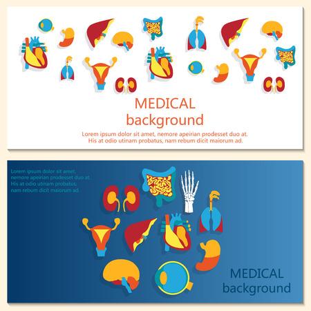 anatomia humana: Concepto del banner. Antecedentes m�dicos. Anatom�a humana. Vectores