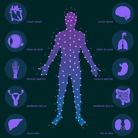 Antecedentes médicos. Anatomía humana.