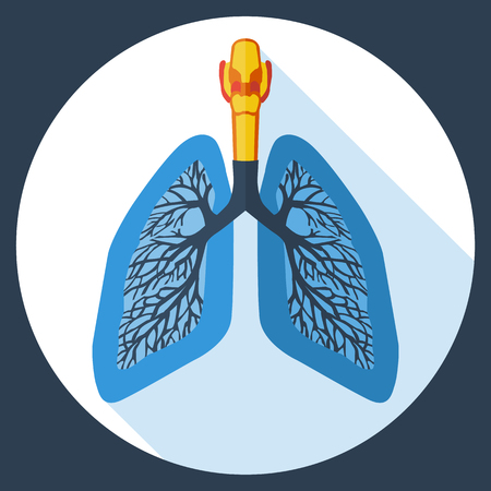 bronchiole: Flat design icon of human lungs. Vector illustration.