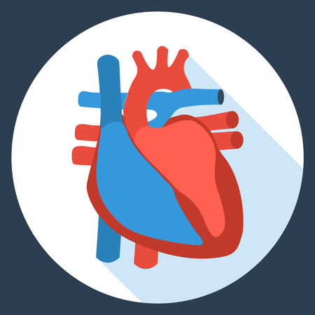 illness: Flat design icon of anatomy of human heart. Vector illustration. Healthcare and medical care symbol. Illustration