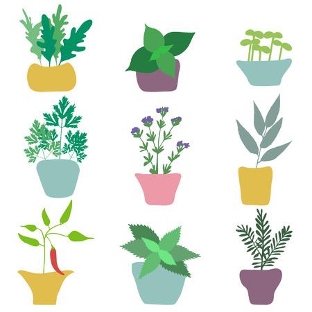 Conjunto de hend dibujado hierbas especias.