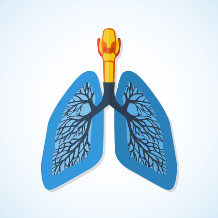 lung transplant: Flat design icon of human lungs isolated on white background. Illustration