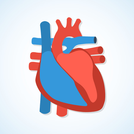 human heart: Icono del diseño plano del corazón humano aislado sobre fondo blanco.