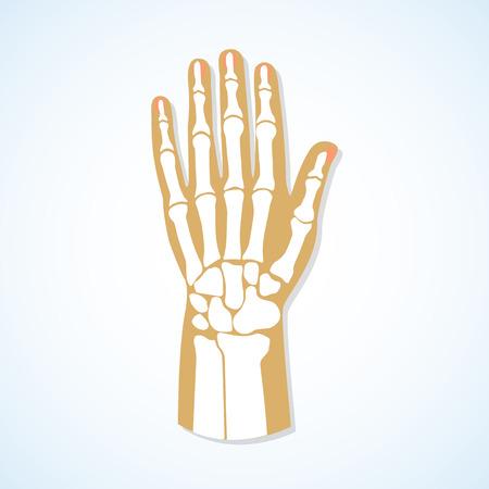 Elin düz tasarım ve el iskeleti. Vector illustration.