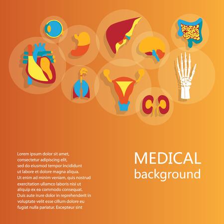 Concepto de antecedentes m�dicos. Iconos del dise�o planas para la anatom�a humana, enorme colecci�n de �rganos humanos.