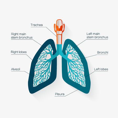 인간의 폐의 평면 디자인 아이콘입니다. 설명 선 및 캡션 의료 이름 인간의 폐의 해부학의 다이어그램.