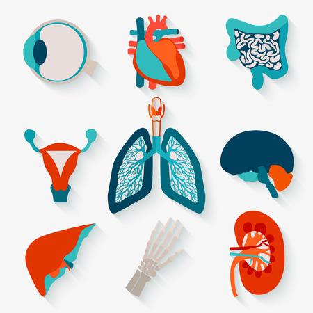 human heart: Iconos médicos de órganos humanos internos se dieron cuenta en el diseño moderno apartamento con una larga sombra.