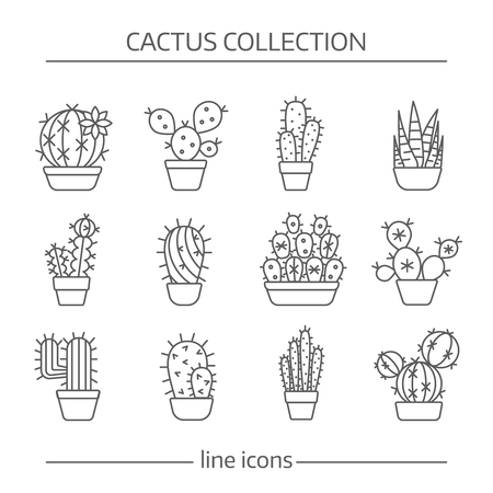 Line icons of cactus