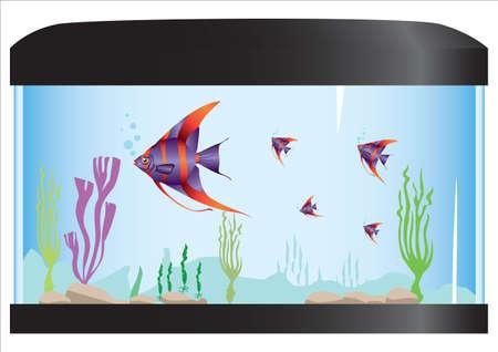 aquarium: aquarium with fish and nature