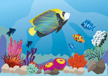 spawning: marine life with colorful fish
