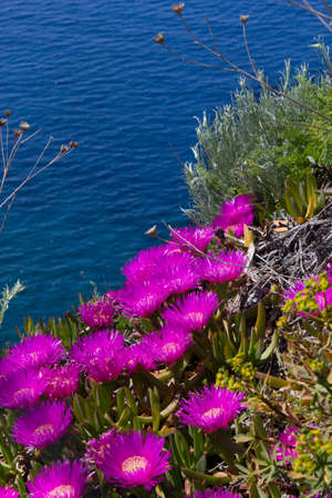 flowers and sea Stock Photo