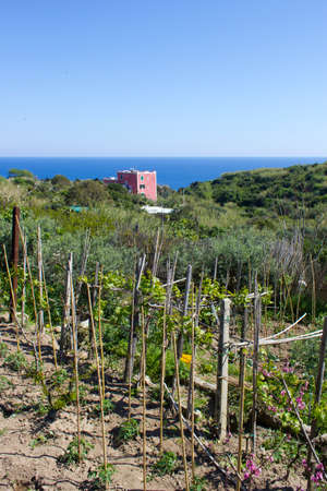 pontine: nature in ventotene