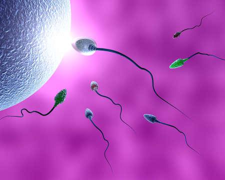 spermatozoon: human sperm
