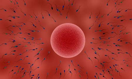 spermatozoon: human sperm and female egg