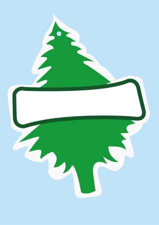 conifer: pine conifer
