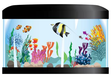fishtank: aquarium