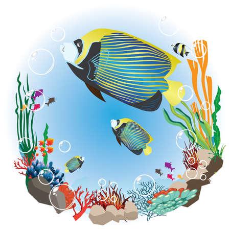 fishtank: underwater life
