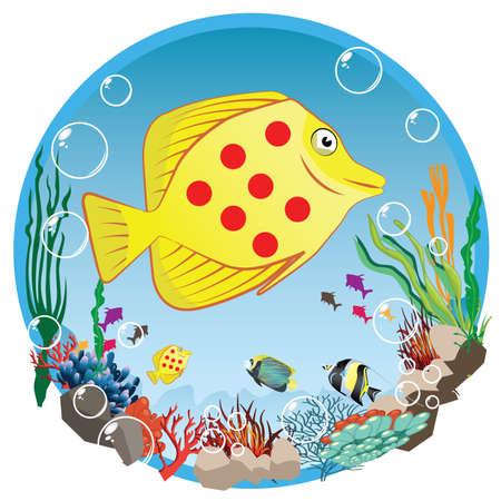underwater life: underwater life