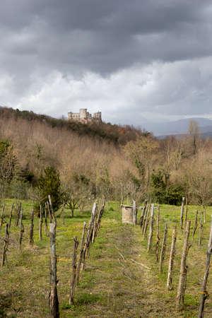 Vineyard and castle at vairano patenora campania