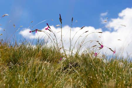mountain grass detail on matese park Stock Photo