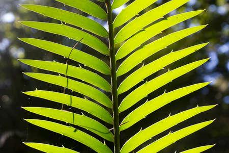 fern in garden plant detail Stock Photo