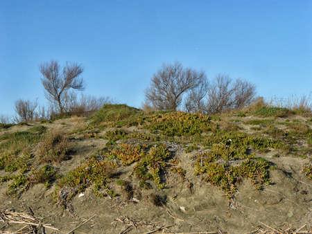 dunes on beach in Sabaudia Lazio italy