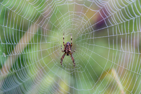 spider on spider web with dewdrops Stockfoto
