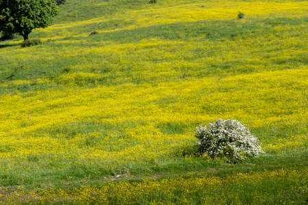 field with yellow flowers on sapwood