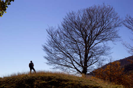 Hiker on the summit of a mountain with tree in silhouette