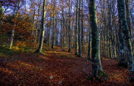 autumn forest and trees wood