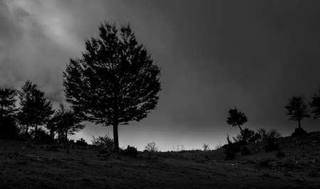 black and white texture of autumn trees Stock Photo