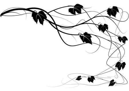 black grape: Decorative element creeper vine branches Illustration