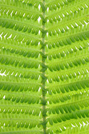 Leaf fern nature in perfect form photo