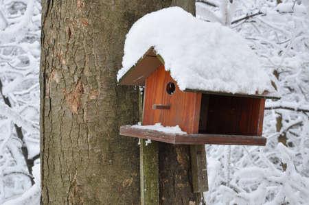 Wooden bird feeder on the tree in winter  photo