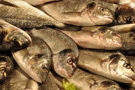 Fish on the market Rialto Venezia  Stock Photo - 21448571