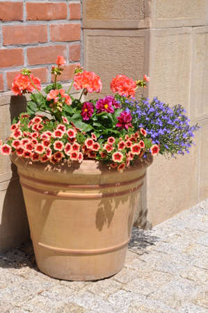 Flowers in the pot on brick wall  photo