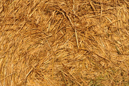 harvest background: Straw after harvest background texture