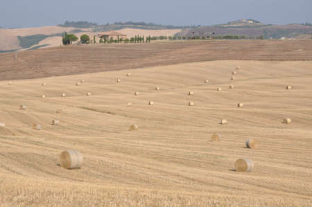 val d'orcia: Hill after the harvest. Val dOrcia, Tuscany, Italy