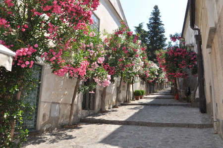 Narrow stone street with flowers in italian town