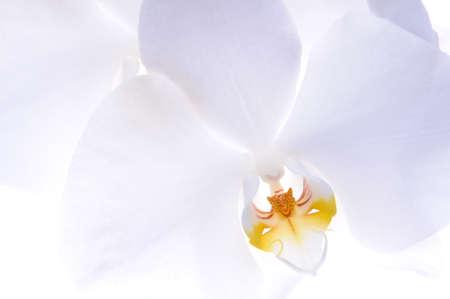 白い背景の上の蘭の花頭 写真素材