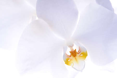 Orchid flower head on a white background