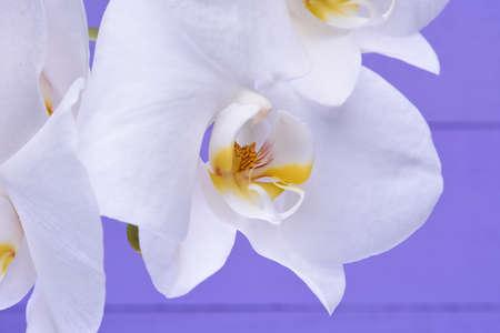 flor morada: Flores blancas de la orqu�dea en un fondo de madera violeta Foto de archivo