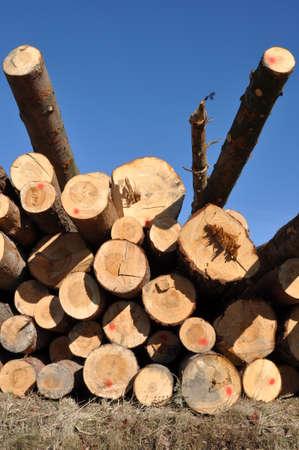felled: Tree Logs in Pile Against Blue Sky