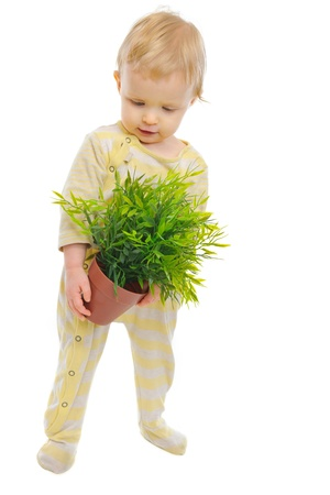 Interested baby examines plant in pot isolated on white Stock Photo - 12349742