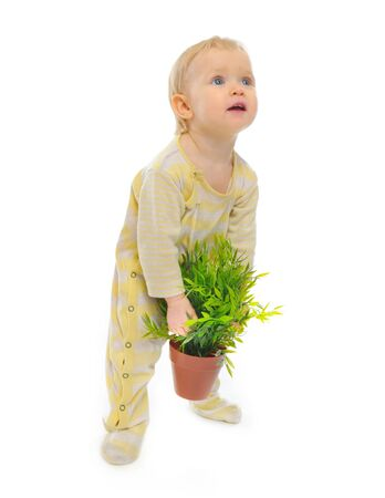 interested baby: Interested baby trying to raise pot with a plant isolated on white
